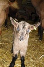 Chèvrerie de la Trufière
